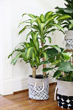 Fabric Planter DIY This is a simple but clever idea for creating a more unified look since all my planters are of different colors and shapes. Big Plants, Indoor Plants, Beautiful Mess, Beautiful Gardens, Wood Plant Stand, Ceramic Flower Pots, Diy Planters, Diy Bag Planter, Idee Diy