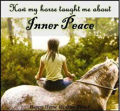Wonderful read for any equestrian