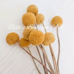 Dried Preserved Yellow Billy Buttons billy button Woollyheads | Etsy