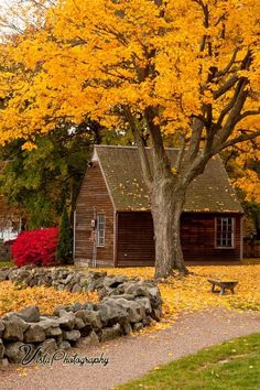Fall Gallery Massachusetts - New England fall foliage New England Fall Foliage, Autumn Scenes, Seasons Of The Year, Fall Pictures, Senior Pictures, Mellow Yellow, Bright Yellow, Belle Photo, Autumn Leaves