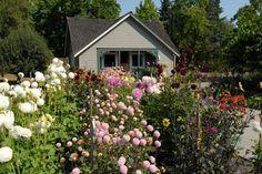 A Green Thumbs-Up for Bellevue Botanical Garden's Grand Reopening - Visit Bellevue