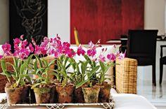 Tire dúvidas sobre cultivo de orquídeas, assista a vídeos e veja uma galeria de fotos com flores maravilhosas