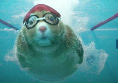 kia soul commercial | Swimming Makes It Into Soul Hamster Cross Trainning Commercial - Video