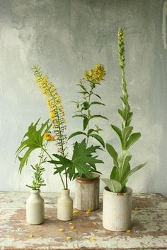 Still life photograph with greenery