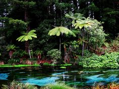 Hamurana Springs, Rotorua, New Zealand Moving To New Zealand, New Zealand Travel, Dream Vacations, Vacation Spots, Vacation Places, Tasmania, The Beautiful Country, Beautiful Places, Places To Travel