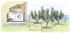 Greywater -- From Laundry To Landscape - Recycle household water and use it in the garden.