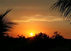 Subtropical sunset (San Carlos Bay Beach Preserve, Florida).  #sun #sunset #palm #palmtrees #sky #clouds #dusk #trees #outdoors #nature #serene #peace #photography