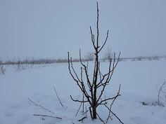 Curatarea pomilor de Par ( taieri la par) - YouTube Republica Moldova, Youtube, Outdoor, Decor, Plant, Life, Outdoors, Decoration, Outdoor Living