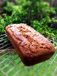 Thermomix paleo bread