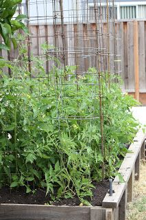 Frugal Frolic: DIY: Frugal Tomato Cages