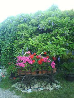 Zázračná sila jedlej sódy v záhrade! Growing Strawberries In Containers, Plants, Gardening, Soda, Internet, Compost, Beverage, Soft Drink, Lawn And Garden