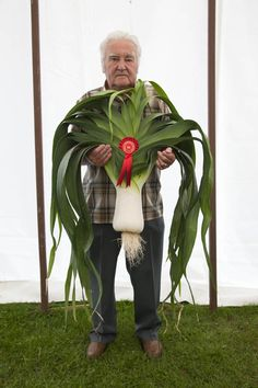Martin Parr, Norman Spoer who won Best Pot Leek, West Bromwich, England, 2010 Wow. Leek-o-liscious. This photo just makes me smile. There's a lot going on in this picture. Martin Parr, Documentary Photographers, Famous Photographers, Color Photography, Street Photography, Photography Projects, Landscape Photography, Portrait Photography, Fashion Photography