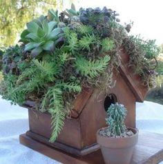 Living Roof Bird House