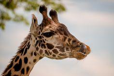I Was Wrong About Disney's Animal Kingdom. - Disney Tourist Blog