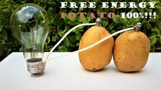 Free energy For Home - - Free energy Projects Videos - Free energy Machine - Gibbs Free energy Videos Science Electricity, Science Projects For Kids, Science Experiments Kids, Science For Kids, School Projects, Potato Light Bulb, How To Make Potatoes, Energy Projects, Activities For Kids