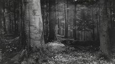 Хироси Сугимото. Нетронутый лес в Северной Пенсильвании. 1980. © Hiroshi  Sugimoto. Courtesy of Gallery Koyanagi