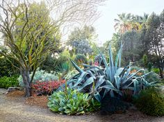 """""""Bold architectural plants create incredible focal points,"""" Kemble notes. """"This 20-plus-year-old agave is striking and powerful but also kind of floppy and whimsical—almost a contradiction in itself. But a garden composed entirely of plants like this would be too sterile. You need to soften it with plants that have a fine texture and little leaves."""""""