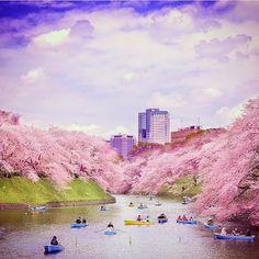 #Tokyo in blossom