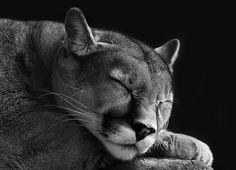 shhhhhhhhh be very very very quiet...!!!