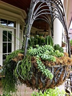 Succulents in a hanging basket.