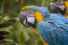 Resultado de imagem para parrot