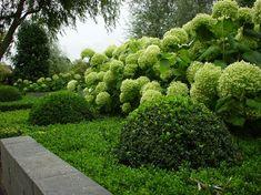 Tuinkunst 2000 | Zwijndrecht - Barendrecht. Dè hovenier voor tuinaanleg,-ontwerp en -onderhoud in de drechtsteden