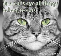 Athena Cat Goddess Wise Kitty: Wordless Wednesday Cat Quotes #WednesdayWisdom