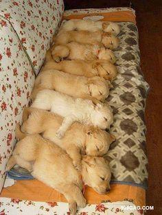 dormindo animais bonitos
