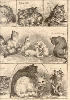 The early history isn't entirely known although it is generally accepted that the early cats came from Persia (now Iran) and Turkey.