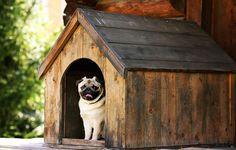 8 Home Improvement Tips from America's New Celebrity Carpenter || Image Source: https://www.menshealth.com/sites/menshealth.com/files/styles/listicle_slide_custom_user_desktop_1x/public/2017/11/14/1-home-improvement-tips-celebrity-carpenter-dog-house.jpg?itok=FfvGNASD