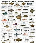 Deep Sea Fish List - Bing images Saltwater Aquarium Fish, Live Aquarium Fish, Fish Chart, Whale Species, Fish List, Kunst Poster, Poster Poster, Salt Water Fish, List Of Animals