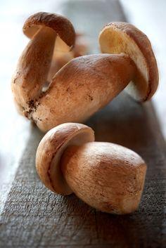 Ceps - Beautiful mushrooms