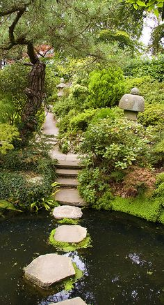 Steps across a shallow pond hidden in your garden