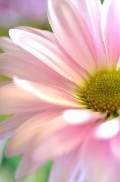 Miss Daisy Photograph by Deb Halloran - Miss Daisy Fine Art Prints and Posters for Sale