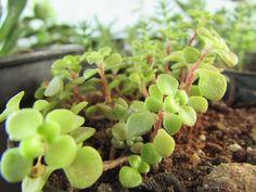 Succulents, Fruit, Amanda, Flowers, Green, Plants, Inspiration, Life, Cement Flower Pots
