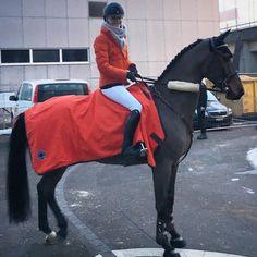 Swiss showjumper, based in Geneva | Sponsored by Hermès, G. Berney, Parlanti | Cute Horses, Pretty Horses, Beautiful Horses, Equestrian Style, Equestrian Fashion, Horse Riding Clothes, Sport, Show Jumping, Geneva