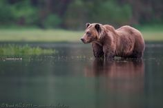 At Peace in the Great Bear Rainforest (click to enlarge)