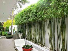 Bamboo Landscape, Modern Landscape Design, Landscape Plans, Garden Landscape Design, House Landscape, Privacy Landscaping, Backyard Privacy, Backyard Fences, Modern Landscaping