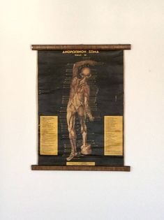A personal favourite from my Etsy shop https://www.etsy.com/listing/569754143/vintage-anatomy-pull-down-chart-rare