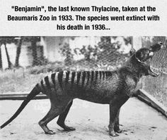 """We'll Never Get To See One Of These Again. Furthermore, we now find ourselves in what is known in science as an """"extinction event,"""" losing many species to extinction ON A DAILY BASIS."""