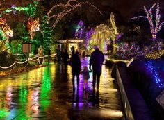 What are you doing this #holiday season? #WildLights at Woodland Park #Zoo opens Nov. 23, 5:30-8:30 nightly through Jan. 1.