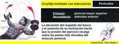 Trabaja tus pectorales con el ejercicio crucifijo inclinado con mancuernas #culturismo #musculacion #pesas #gym #gimnasio #ejercicios #musculos #mancuernas #entrenamiento