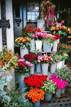 street blooms.