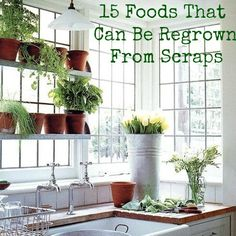 15 Foods That Can Be Regrown From Scraps - Mrs Happy Homemaker
