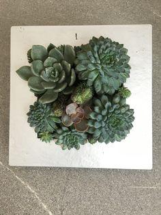 Succulent Arrangements, Succulents, Picture Design, Garden Ideas, Plants, Pictures, Art, Photos, Art Background