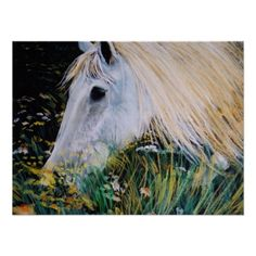 horse (eliso) poster http://www.zazzle.com/horse_eliso_poster-228441753630781254?lang=es