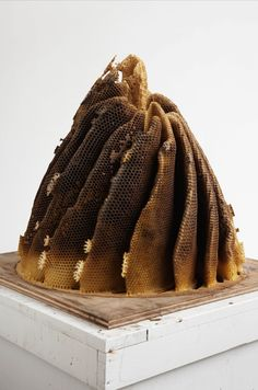 contemporary-art-blog:  Hilary Berseth Programmed Hive #8 2008