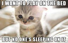 33 FIRST WORLD CAT PROBLEMS | CutesyPooh