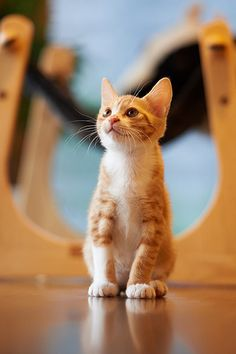 .oh orange kitten, one day you will be mine, just dont tell stephen ;)