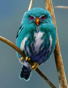 นกฮูกสีเขียว green Owl อย่าพึ่งเชื่อในสิ่งที่ตาเห็น...…